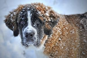 Winter prepping for your pets